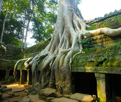 Ta Prohm - Popular jungle temple of Angkor temples